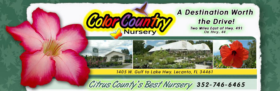 Color Country Nursery - 1405 W. Gulf to Lake Hwy. Lecanto, FL 34461 352-746-6465